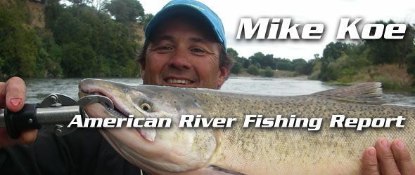 FEATURED_Salmon-American-River2011