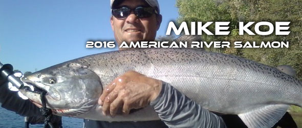 FEATURED_2016-American-River-salmon